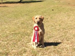 Liberty Pups » Duke